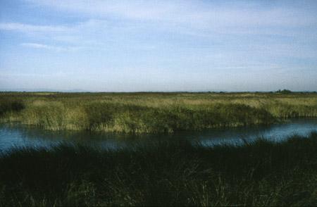 Delta del Rodano, in Camargue